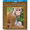 Disneynature: Monkey Kingdom (Bilingual) (Blu-ray Combo) (2015)
