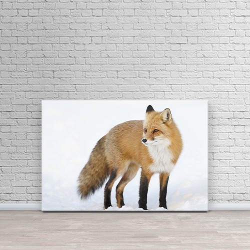 Printscapes Wall Art  Canvas Print Red Fox Vulpes Vulpes Standing In The Snow In Winter By Vladislav Kamenski Online Only