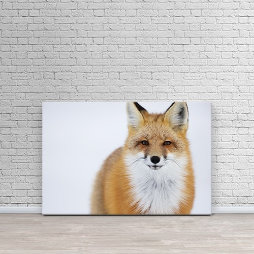 Printscapes Wall Art  Canvas Print Portrait Of Red Foxchurchill Manitoba Canada By Robert Postma Wall Art Best Buy Canada