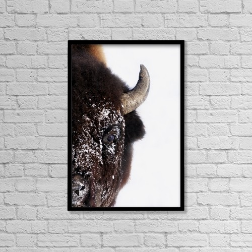 """Printscapes Wall Art: 12"""" x 18"""" Canvas Print With Black Frame - Bison In Winter by Richard Wear"""