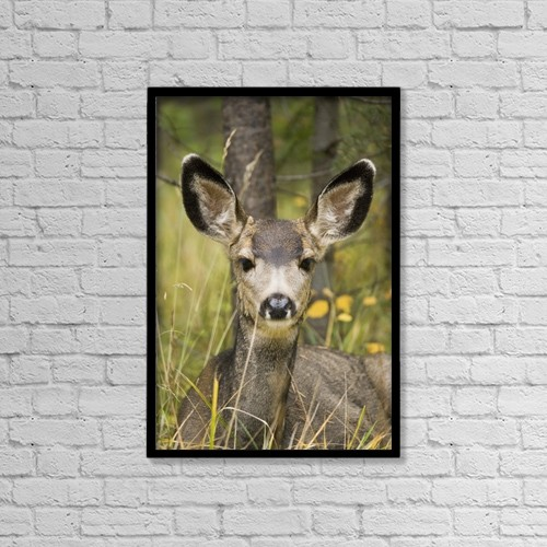 "Printscapes Wall Art: 12"" x 18"" Canvas Print With Black Frame - Animals by Henry Georgi Photography Inc"