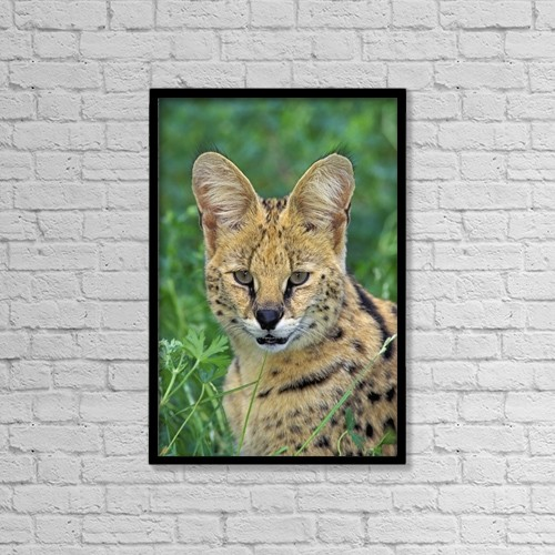"Printscapes Wall Art: 12"" x 18"" Canvas Print With Black Frame - Serval by Thomas Kitchin & Victoria Hurst"