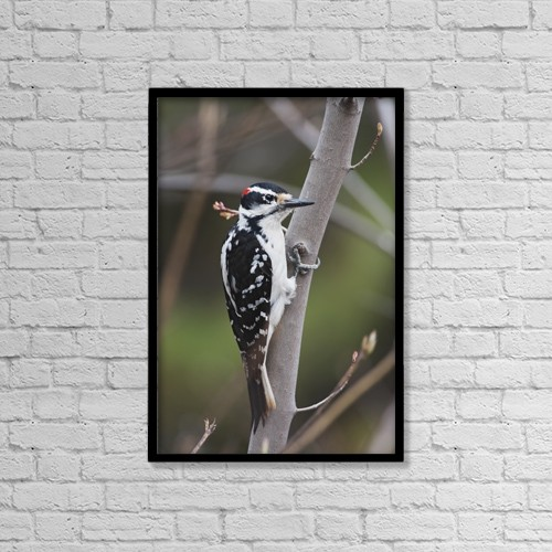 "Printscapes Wall Art: 12"" x 18"" Canvas Print With Black Frame - Animals by Amy Kay"