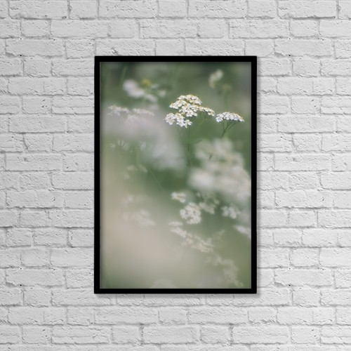 "Printscapes Wall Art: 12"" x 18"" Canvas Print With Black Frame - Cow Parsnip, Alberta, Canada by Darwin Wiggett"