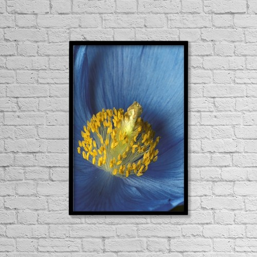"Printscapes Wall Art: 12"" x 18"" Canvas Print With Black Frame - Close Up Detail Of Blue Poppy by Hal Gage"