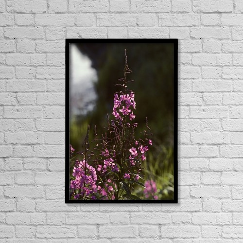 "Printscapes Wall Art: 12"" x 18"" Canvas Print With Black Frame - Fireweed In Alaska by Jeff Schultz"