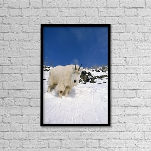 "Printscapes Wall Art: 12"" x 18"" Canvas Print With Black Frame - Animals by Tom Soucek"