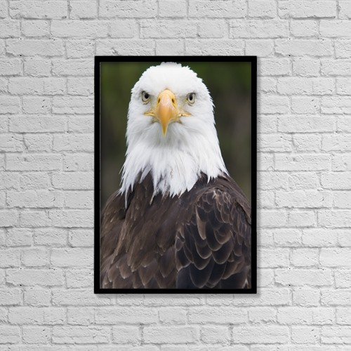 "Printscapes Wall Art: 12"" x 18"" Canvas Print With Black Frame - Animals by Philippe Henry"