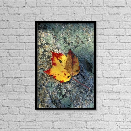 "Printscapes Wall Art: 12"" x 18"" Canvas Print With Black Frame - Usa, New Hampshire, Maple Leaf On Granite by Chris Coe"
