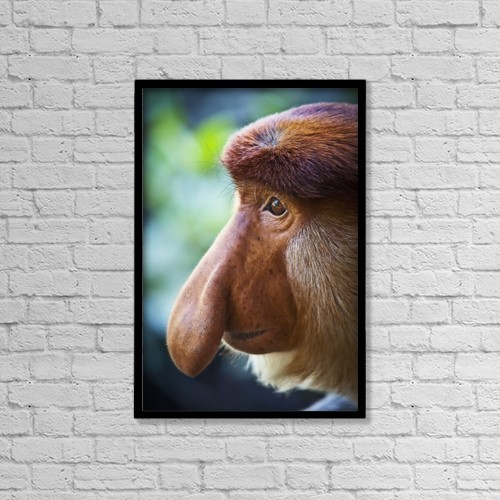 "Printscapes Wall Art: 12"" x 18"" Canvas Print With Black Frame - Proboscis monkey (nasalis larvatus);Borneo by Alex Adams"