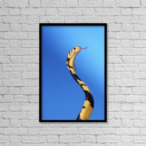"Printscapes Wall Art: 12"" x 18"" Canvas Print With Black Frame - Animals by Thomas Kitchin & Victoria Hurst"