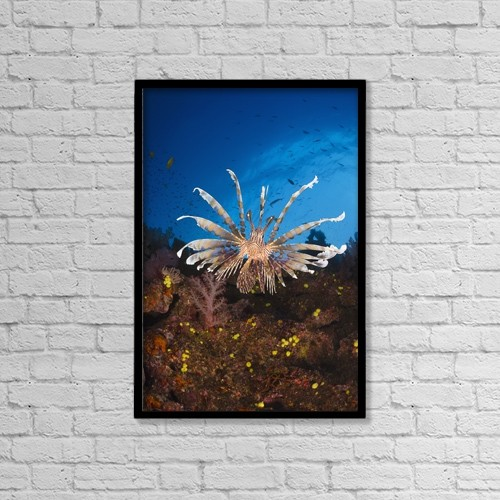 "Printscapes Wall Art: 12"" x 18"" Canvas Print With Black Frame - Fiji, Lionfish (Pterois Volitans) by Dave Fleetham"