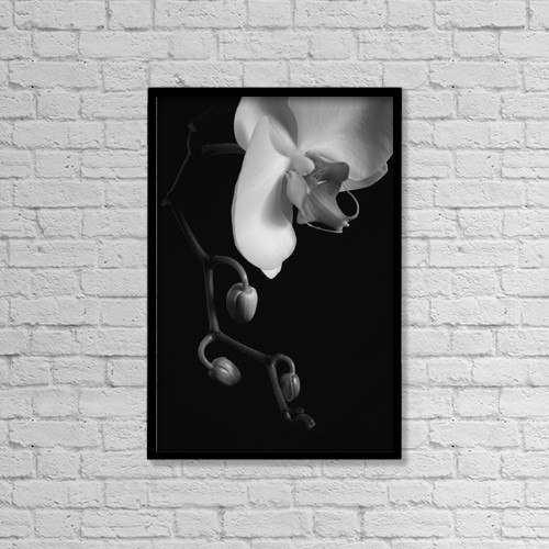 "Printscapes Wall Art: 12"" x 18"" Canvas Print With Black Frame - Orchid; Waterloo, Quebec, Canada by David Chapman"