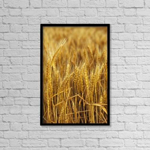 "Printscapes Wall Art: 12"" x 18"" Canvas Print With Black Frame - Golden Wheat Heads by Robert L. Potts"