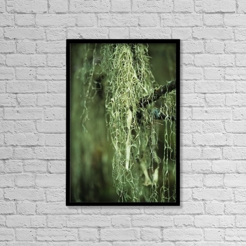 """Printscapes Wall Art: 12"""" x 18"""" Canvas Print With Black Frame - Lichen Hangs From A Tree by Robert L. Potts"""