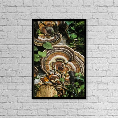 "Printscapes Wall Art: 12"" x 18"" Canvas Print With Black Frame - Turkey Tail Fungus by Robert L. Potts"