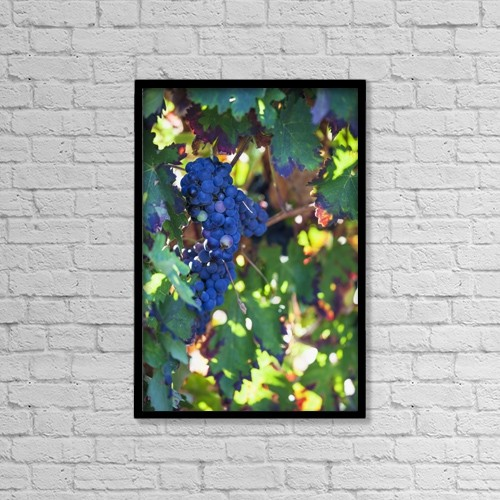 "Printscapes Wall Art: 12"" x 18"" Canvas Print With Black Frame - Grapes growing on a vine by Carlos Sanchez Pereyra"
