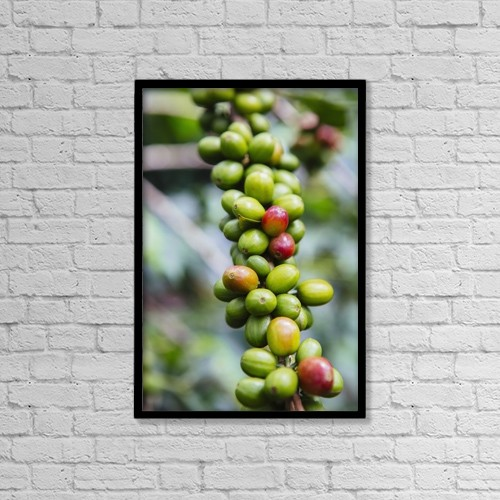 "Printscapes Wall Art: 12"" x 18"" Canvas Print With Black Frame - Coffee Growing In The Highlands Of Ethiopia by Toby Adamson"