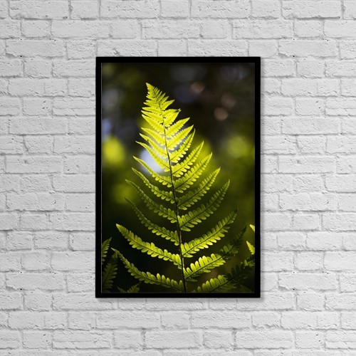 """Printscapes Wall Art: 12"""" x 18"""" Canvas Print With Black Frame - A Backlit Fern Frond; Northumberland, England by John Short"""