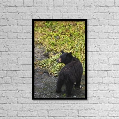 "Printscapes Wall Art: 12"" x 18"" Canvas Print With Black Frame - Animals by Lucas Payne"