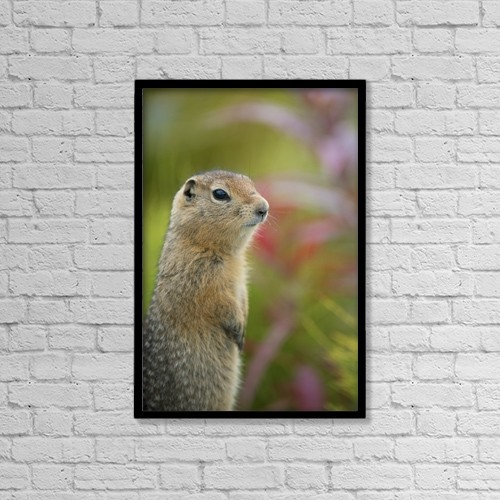 """Printscapes Wall Art: 12"""" x 18"""" Canvas Print With Black Frame - Arctic Ground Squirrel, Alaska by Cathy Hart"""
