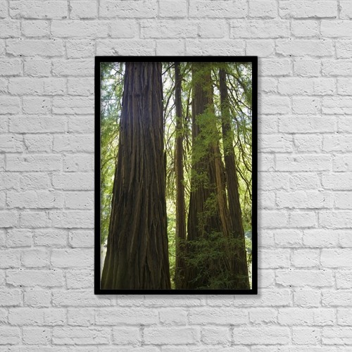 "Printscapes Wall Art: 12"" x 18"" Canvas Print With Black Frame - Redwoods In Muir Woods National Monument by Beanstock Images"