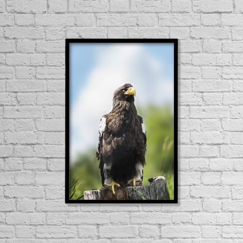 "Printscapes Wall Art: 12"" x 18"" Canvas Print With Black Frame - Golden Eagle, Assiniboine Park Zoo by Ken Gillespie"