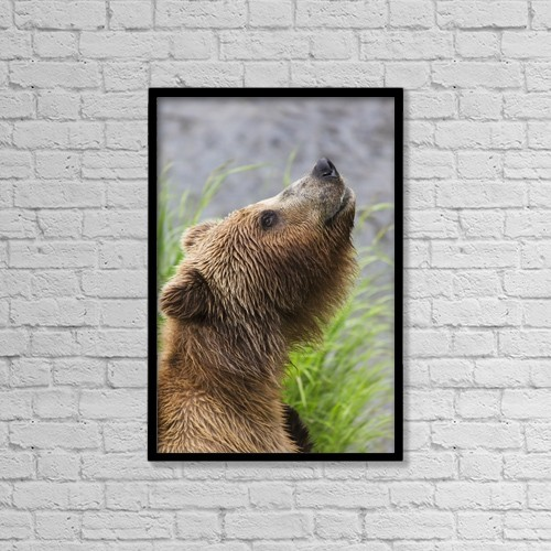 """Printscapes Wall Art: 12"""" x 18"""" Canvas Print With Black Frame - Animals by Lucas Payne"""