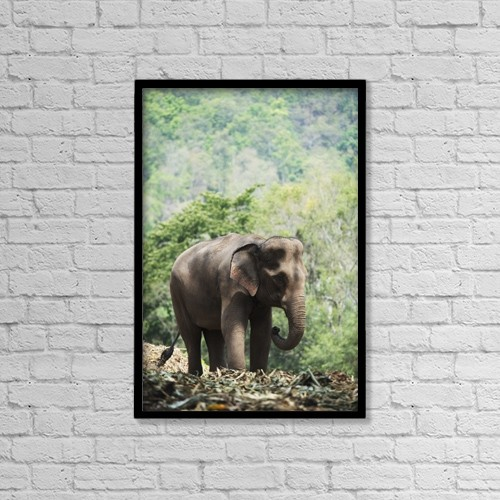 "Printscapes Wall Art: 12"" x 18"" Canvas Print With Black Frame - Baby Elephant; Chiang Mai, Thailand by Stuart Corlett"