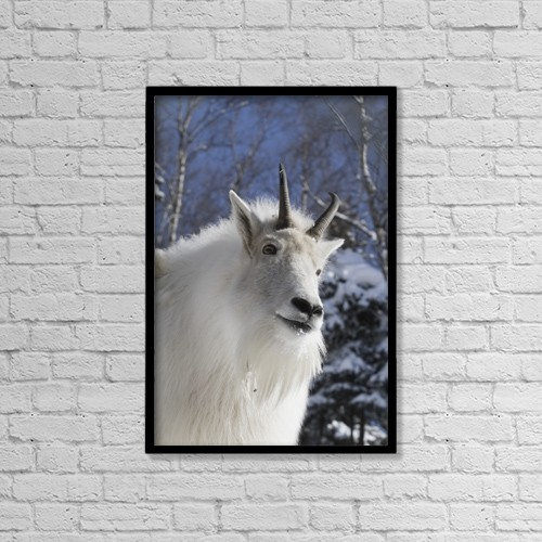 """Printscapes Wall Art: 12"""" x 18"""" Canvas Print With Black Frame - Adult Mountain Goat by Doug Lindstrand"""