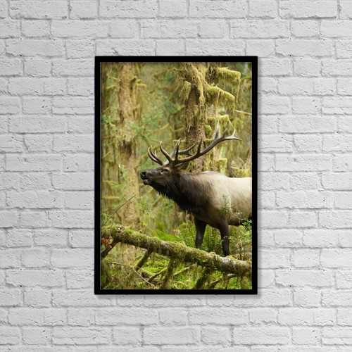 "Printscapes Wall Art: 12"" x 18"" Canvas Print With Black Frame - Animals by John Mahan"