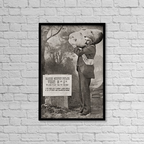 "Printscapes Wall Art: 12"" x 18"" Canvas Print With Black Frame - The Biggest Potato On Record In 1879 by Ken Welsh"