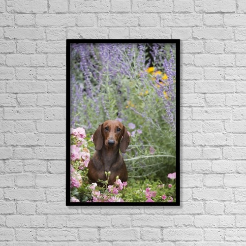 "Printscapes Wall Art: 12"" x 18"" Canvas Print With Black Frame - Standard Dachshund In Summer Garden Flowers by Lynn Stone"