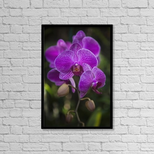 "Printscapes Wall Art: 12"" x 18"" Canvas Print With Black Frame - Phalaenopsis Orchids In Bloom by Tomas del Amo"