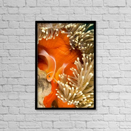 "Printscapes Wall Art: 12"" x 18"" Canvas Print With Black Frame - Marine Life by Dave Fleetham"