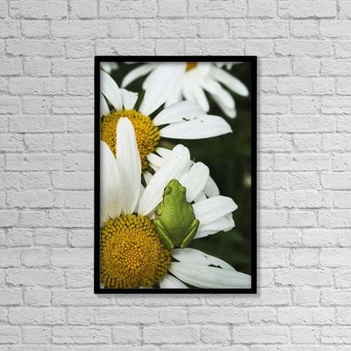 "Printscapes Wall Art: 12"" x 18"" Canvas Print With Black Frame - Tree Frog Rests On A Daisy by Robert L. Potts"