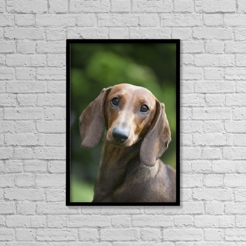 "Printscapes Wall Art: 12"" x 18"" Canvas Print With Black Frame - Portrait Of A Standard Dashchund by Lynn Stone"