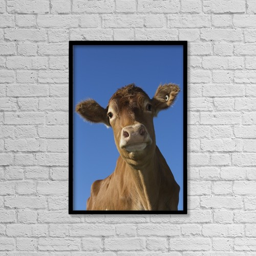 """Printscapes Wall Art: 12"""" x 18"""" Canvas Print With Black Frame - Guernsey Dairy Cow by Lynn Stone"""