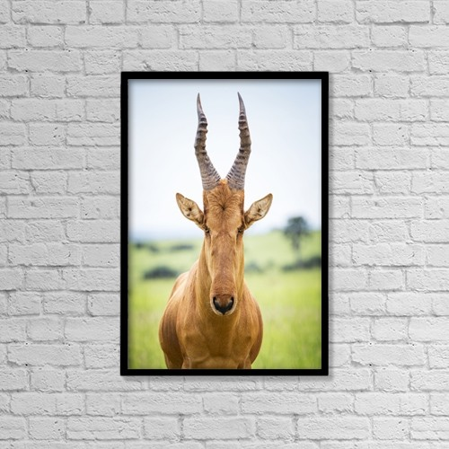 "Printscapes Wall Art: 12"" x 18"" Canvas Print With Black Frame - Animals by Reynold Mainse"