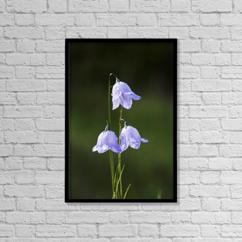"Printscapes Wall Art: 12"" x 18"" Canvas Print With Black Frame - Flowers by Michael Interisano"