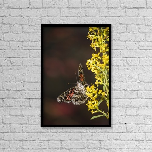 "Printscapes Wall Art: 12"" x 18"" Canvas Print With Black Frame - Animals by Robert L. Potts"