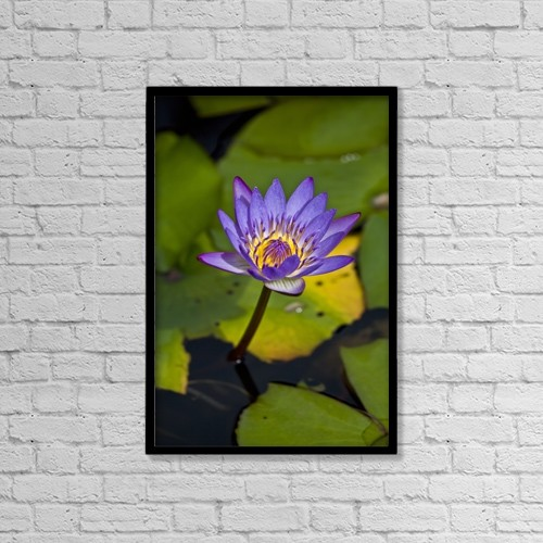 "Printscapes Wall Art: 12"" x 18"" Canvas Print With Black Frame - A Purple Lily Blossoming by Scott Mead"