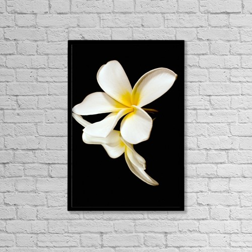 "Printscapes Wall Art: 12"" x 18"" Canvas Print With Black Frame - Flowers by Scott Mead"