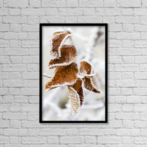 """Printscapes Wall Art: 12"""" x 18"""" Canvas Print With Black Frame - Close Up Of Frosted Dried Brown Leaves by Michael Interisano"""