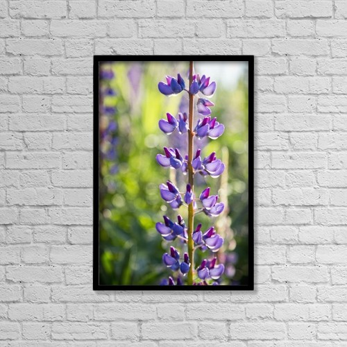 """Printscapes Wall Art: 12"""" x 18"""" Canvas Print With Black Frame - Lupin In Blossom, Tynehead Park by Lorna Rande"""