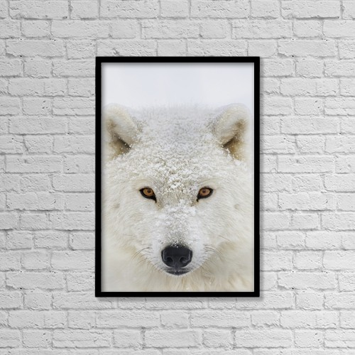 "Printscapes Wall Art: 12"" x 18"" Canvas Print With Black Frame - Arctic Wolf (Canis Lupus Arctos) Portrait by Dominic Marcoux"
