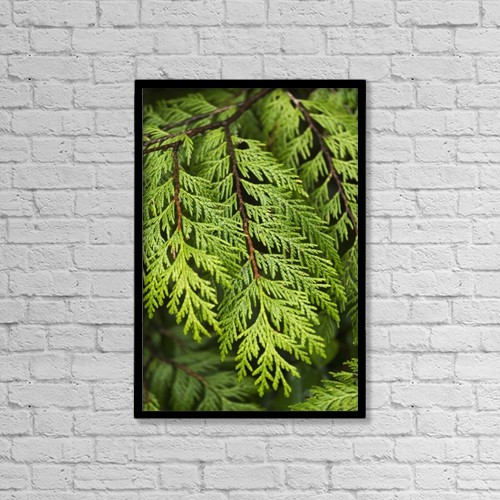 "Printscapes Wall Art: 12"" x 18"" Canvas Print With Black Frame - Close Up Of Lush Green Plant by Keith Levit"