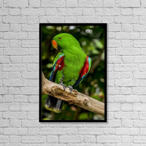 "Printscapes Wall Art: 12"" x 18"" Canvas Print With Black Frame - Electus Parrot At Victoria Butterfly Gardens by Cathy Hart"