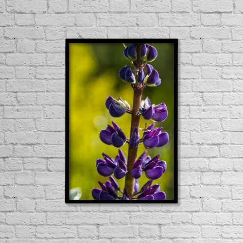 "Printscapes Wall Art: 12"" x 18"" Canvas Print With Black Frame - Lupine Plant Stands Tall In A Garden by Robert L. Potts"