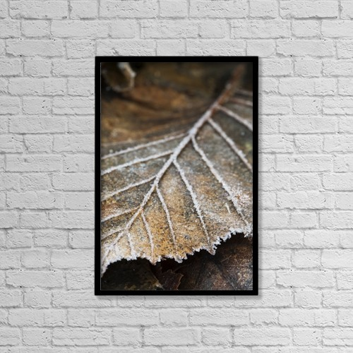 "Printscapes Wall Art: 12"" x 18"" Canvas Print With Black Frame - Close-Up Detail Of A Frost Covered Leaf by Scott Dickerson"
